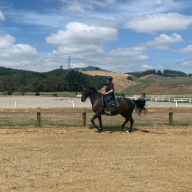 How to stop the horse without using your reins.